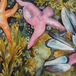 Starfish by Jane Skipsey